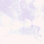 Novel - Timshel / otom